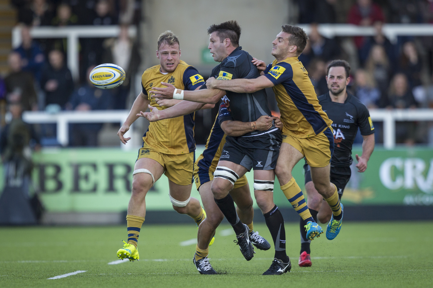 Newcastle Falcons v Bristol Rugby, Sept 2106